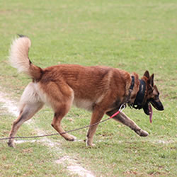 K9 Boot Camp Sniffing Dog