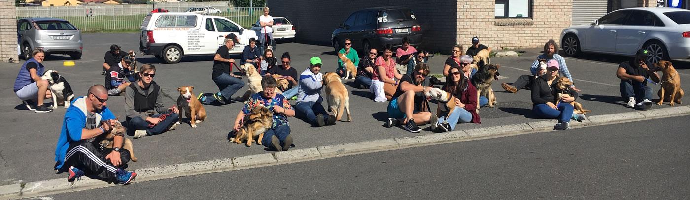 dog training malmesbury