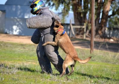 Security Dog Training